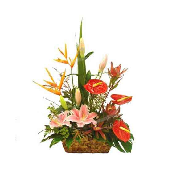 Anthurium,-BOP-&-Lily