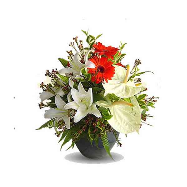 Anthurium-Gerbera-&-Lily-Ar