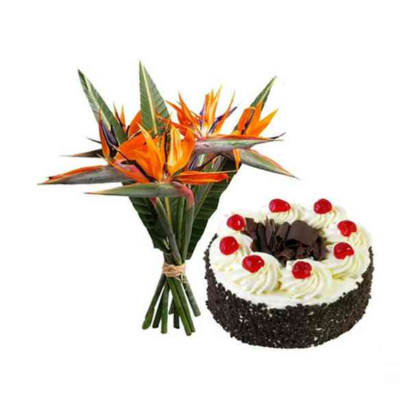 Bird-of-Paradise-&-Cake
