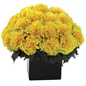 Yellow-Carnation-Basket
